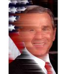 Bush_winded_right_5