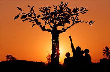 Tree_of_life_1
